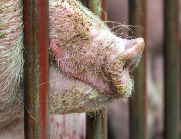 Here's the Huge Problem With All That 'Humane' Meat