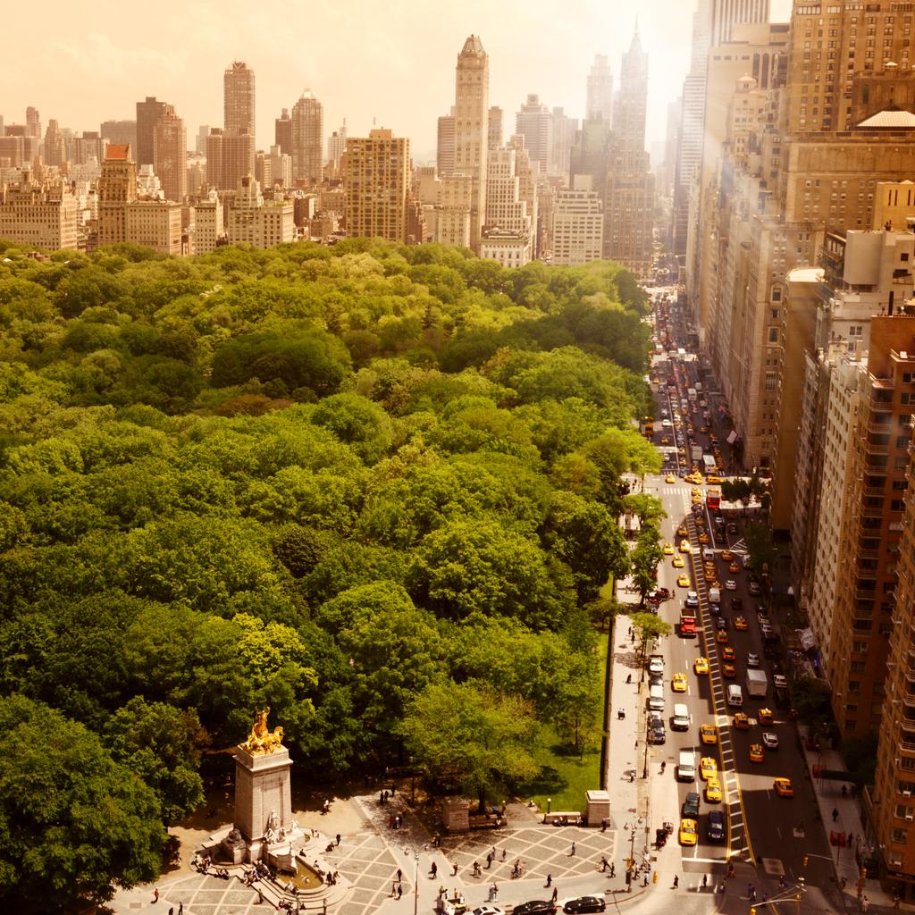 City Trees Don't Sleep Well