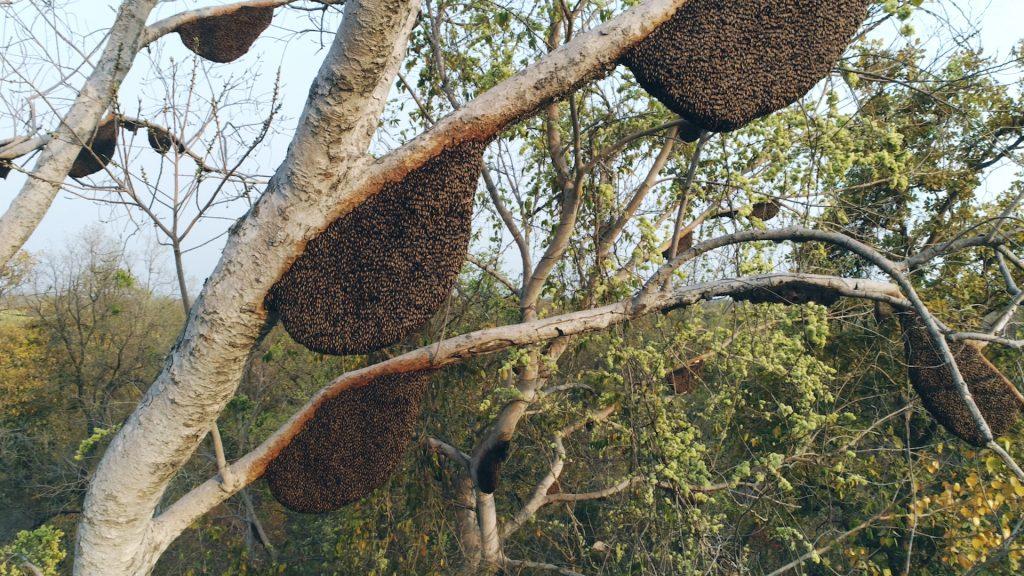 heavenly organics sustainable honey