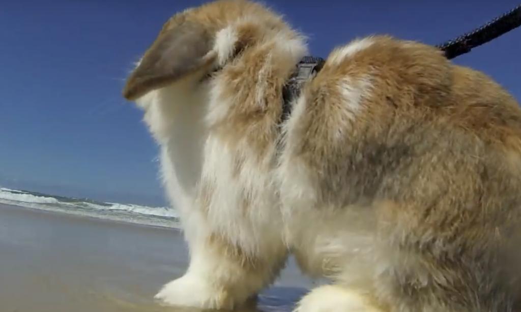 We love this rabbit.