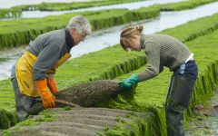 Is Algae the Eco Fuel We've Been Waiting For?