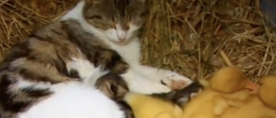 This cat did the sweetest thing.