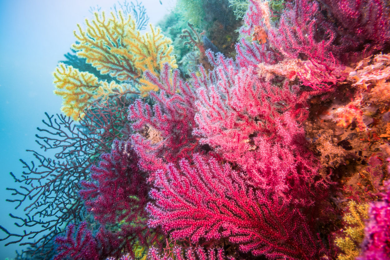 Why Some Corals Crave Plastic