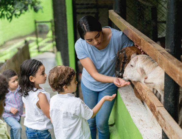 Why​ Animal ​Sanctuaries​ ​Matter