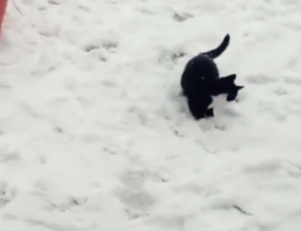 We just love these kittens in the snow.