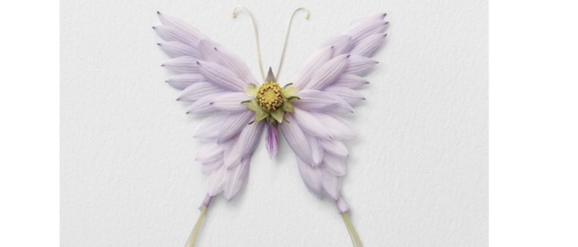 This insect art is beautiful.