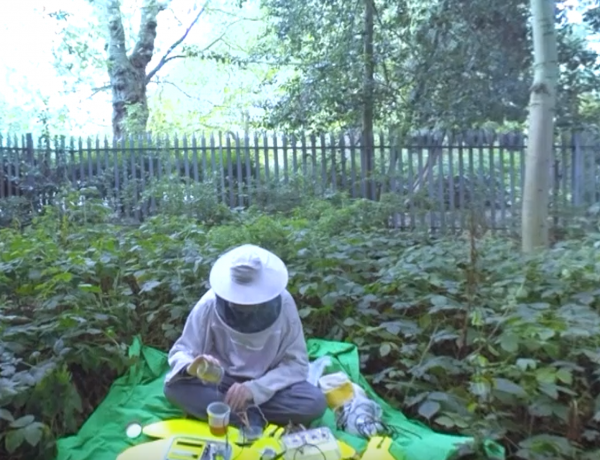 A beekeeper and his bees.