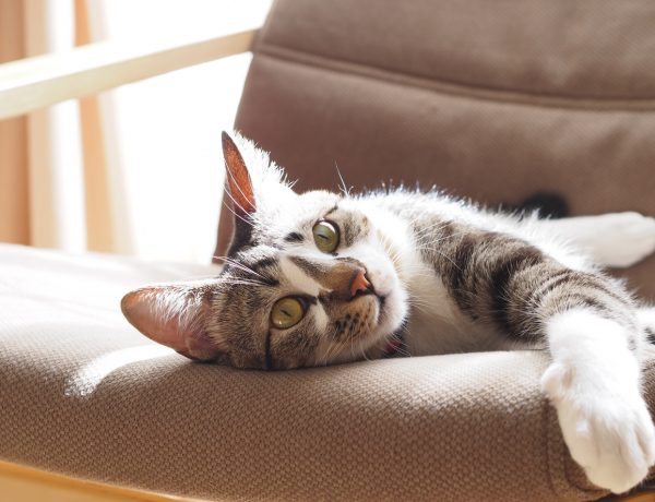 7 Home Decor Finds Both Cats and Humans Can Get Behind