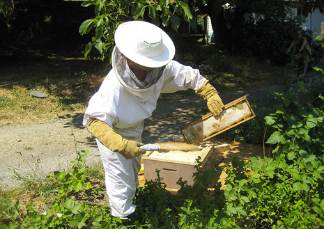 Beekeeping at home