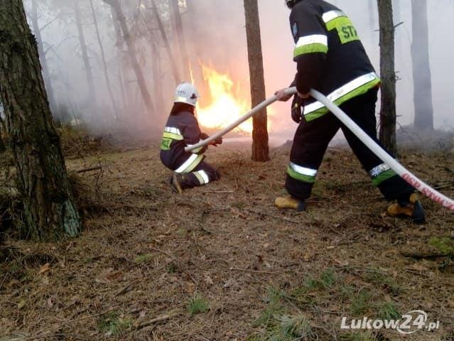 Pracowity tydzień strażaków ze Stoczka. Płonęła m.in. ściółka leśna.  - Zdjęcie główne