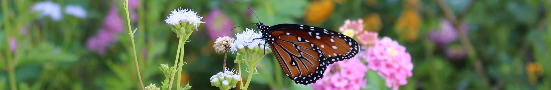 Photo and Video Gallery Monarch Landing