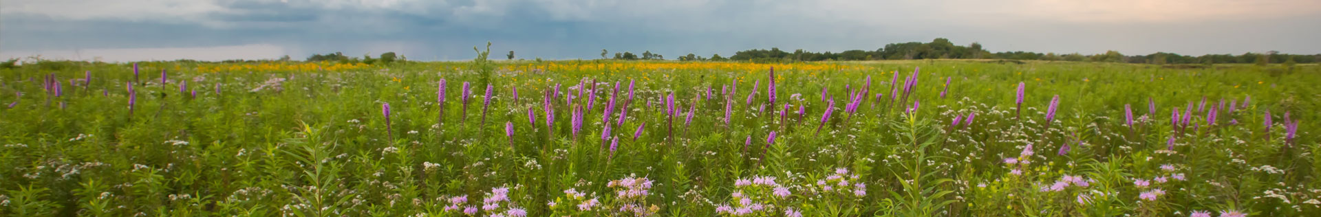 A photo of blooming wildflowers in a field