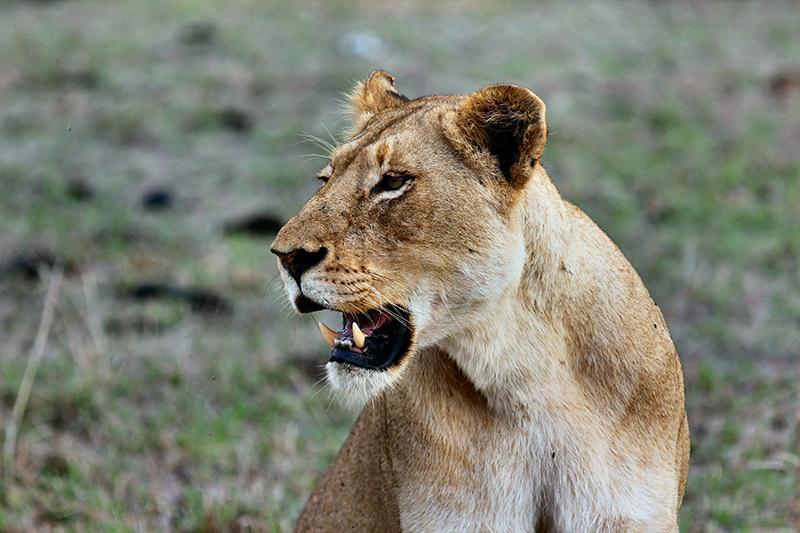 Days 3 - 5. Kruger National Park thumbnail