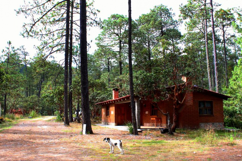 Cabin exterior with wooded pathways