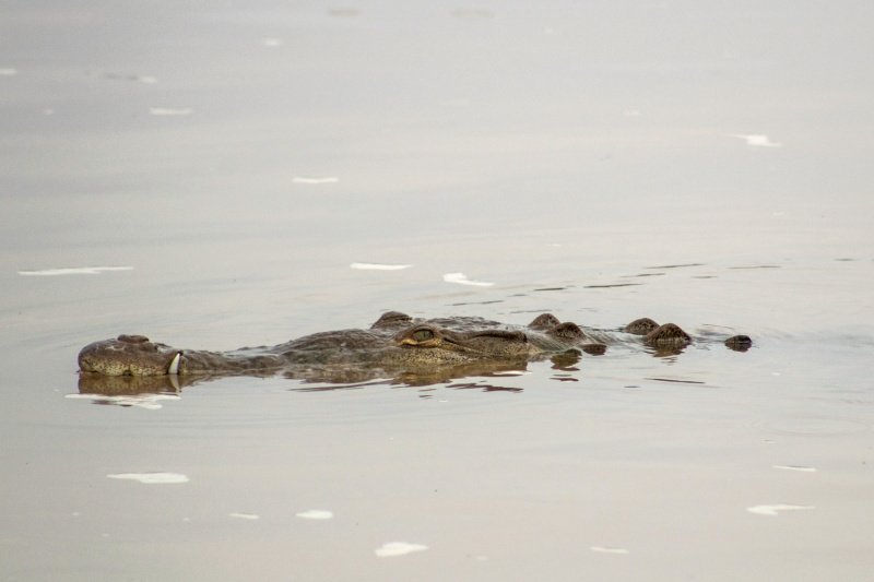 This tour includes stops to spot crocodiles in the river
