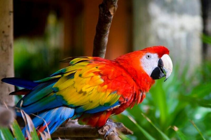 Spot native wildlife in the jungle