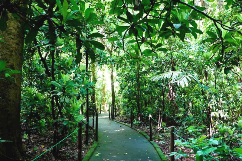 The accessible pathway through the jungle