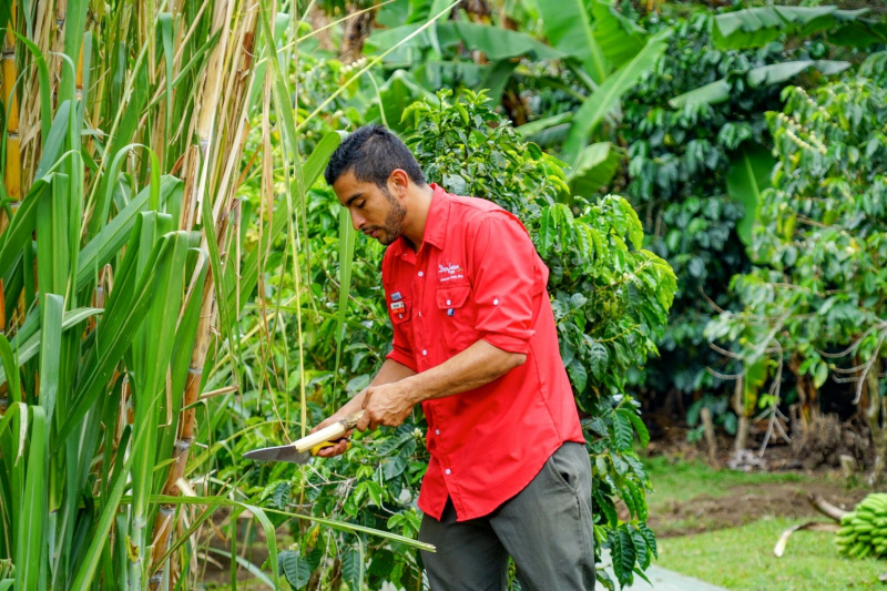 Man cuts sugar cane for guests to enjoy