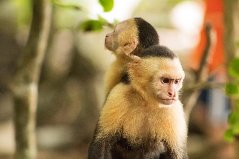 Small monkeys seen near the nature pathways