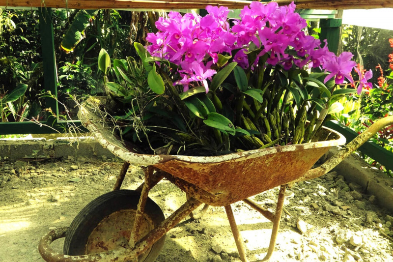 Flowers a wheelbarrow