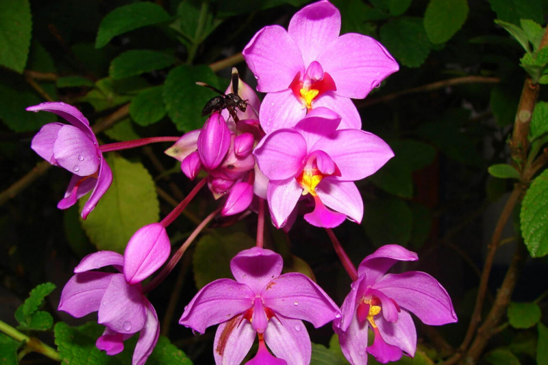 View of orchids in garden
