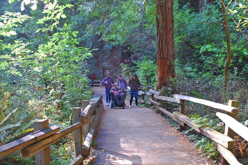Exploring Muir Woods