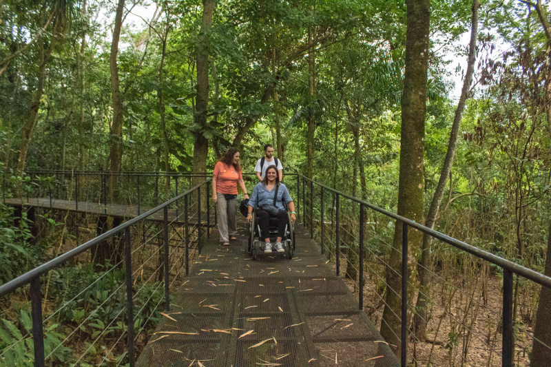 Elevated pathway with handrails and 360 views of the forest.