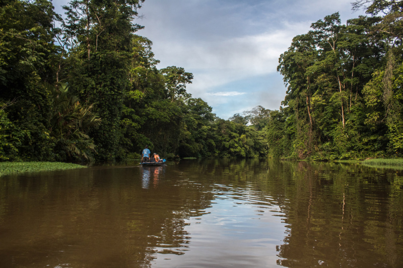 The tortuguero Canal is surrounded by lush green forests