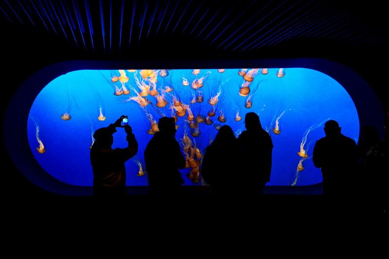 Monterey Bay Aquarium with Wheel the World travelers admiring jelly fish