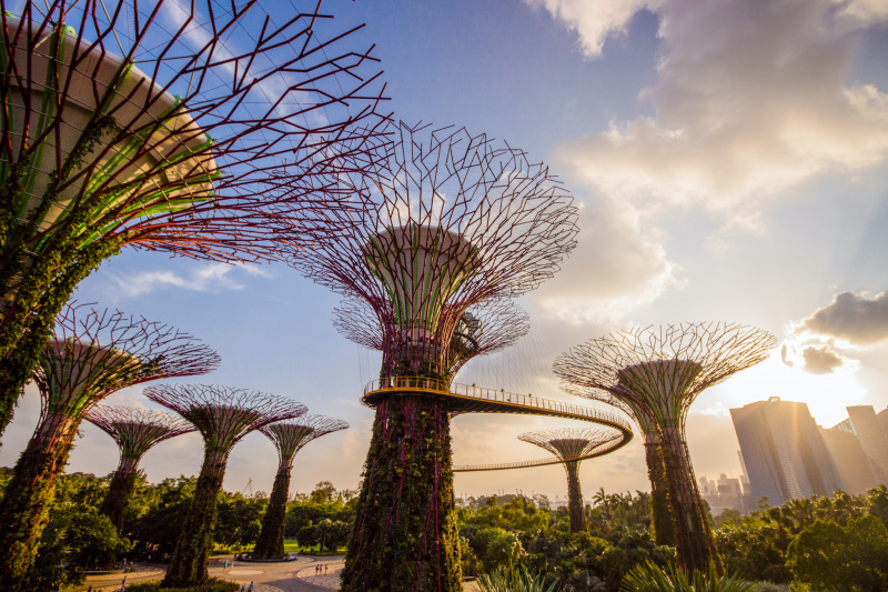 Modern tree-like structures