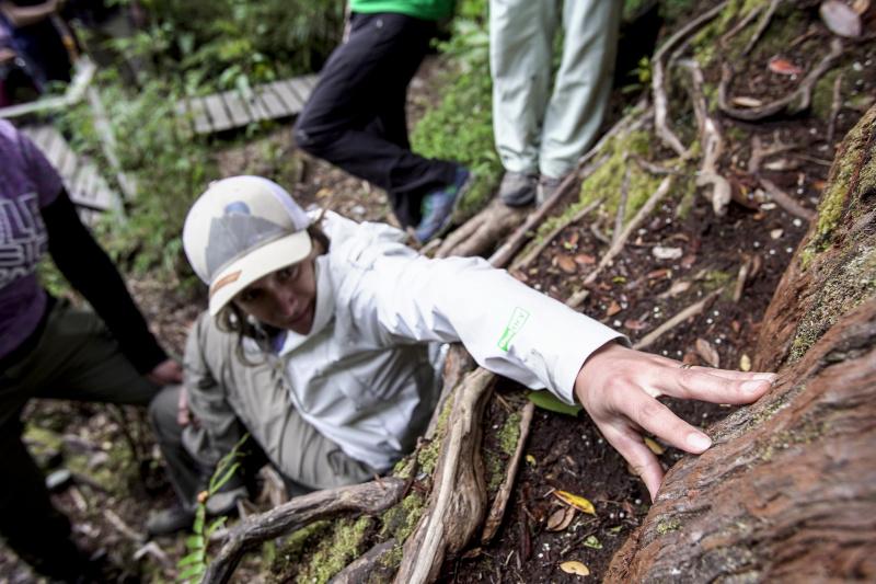 Exploring Chaitén forests
