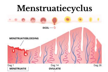 Menstruatiecyclus bij 0 weken zwanger