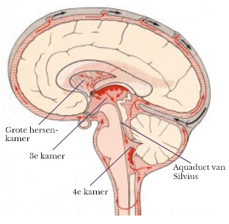 Stroming van het hersenvocht in de hersenkamers