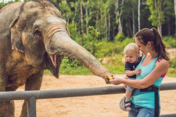 Dierentuin peuter en moeder voeren olifant