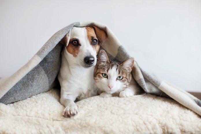 Cuidar tus muebles de las mascotas no significa que debas correrlas de casa o que agregues objetos que desentonan de la decoración.