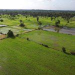 cambodia-rice-field
