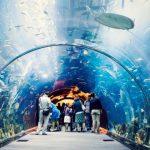Angkor-Wildlife-Aquarium-1
