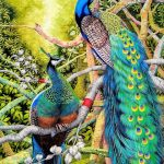 Chhoeun-Channy-House-in-the-Jungle-Peacock