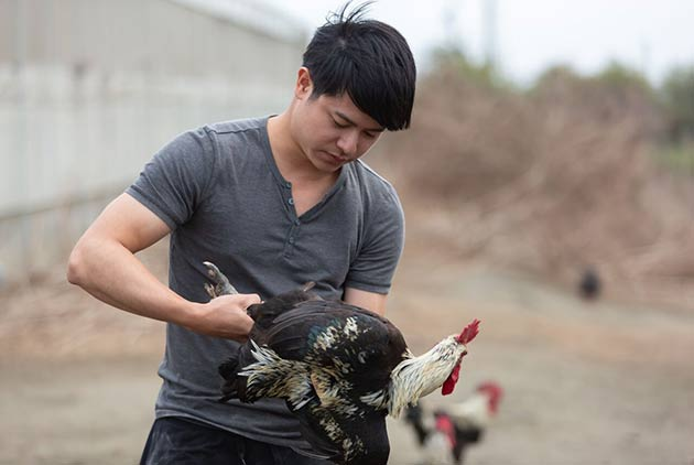 陽明碩士返鄉從農,養出趴趴走的勇健放牧雞