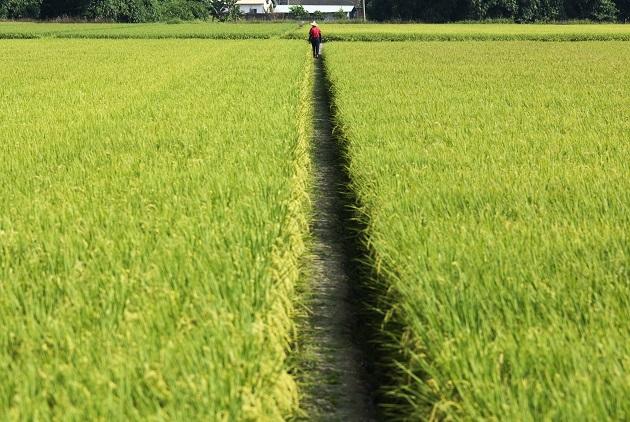 小英歡慶農產出口創新高,真相是稻米愈賣賠愈多