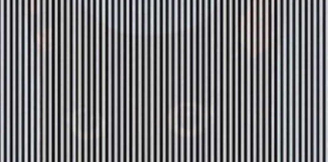 ilusion-optica-gato