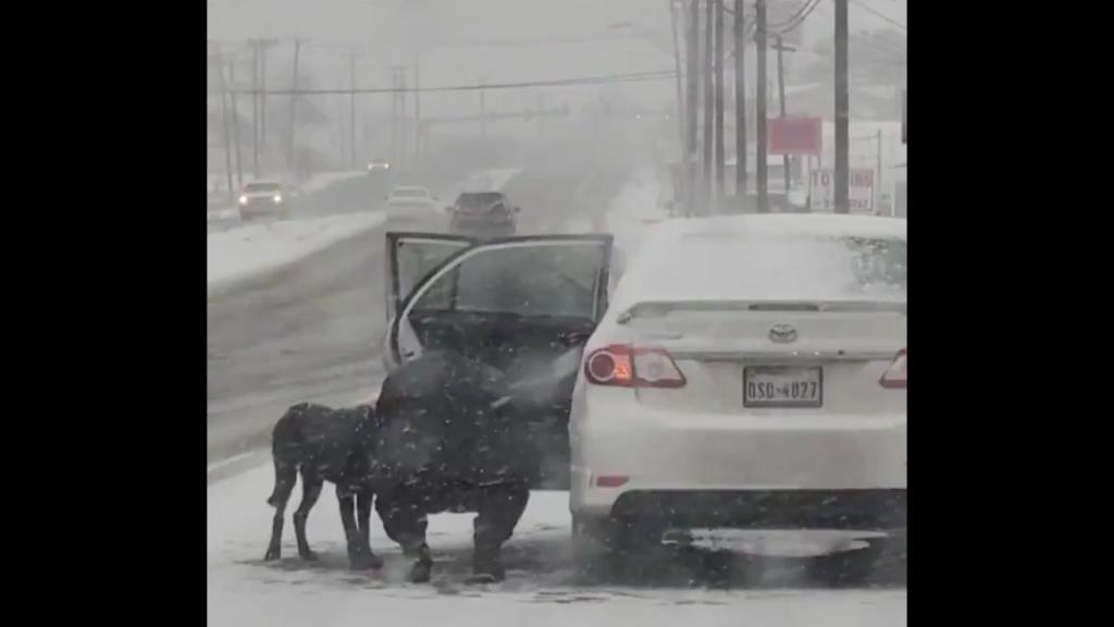 Video-perro-callejero