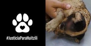 perrito-quemado-Huitzilli