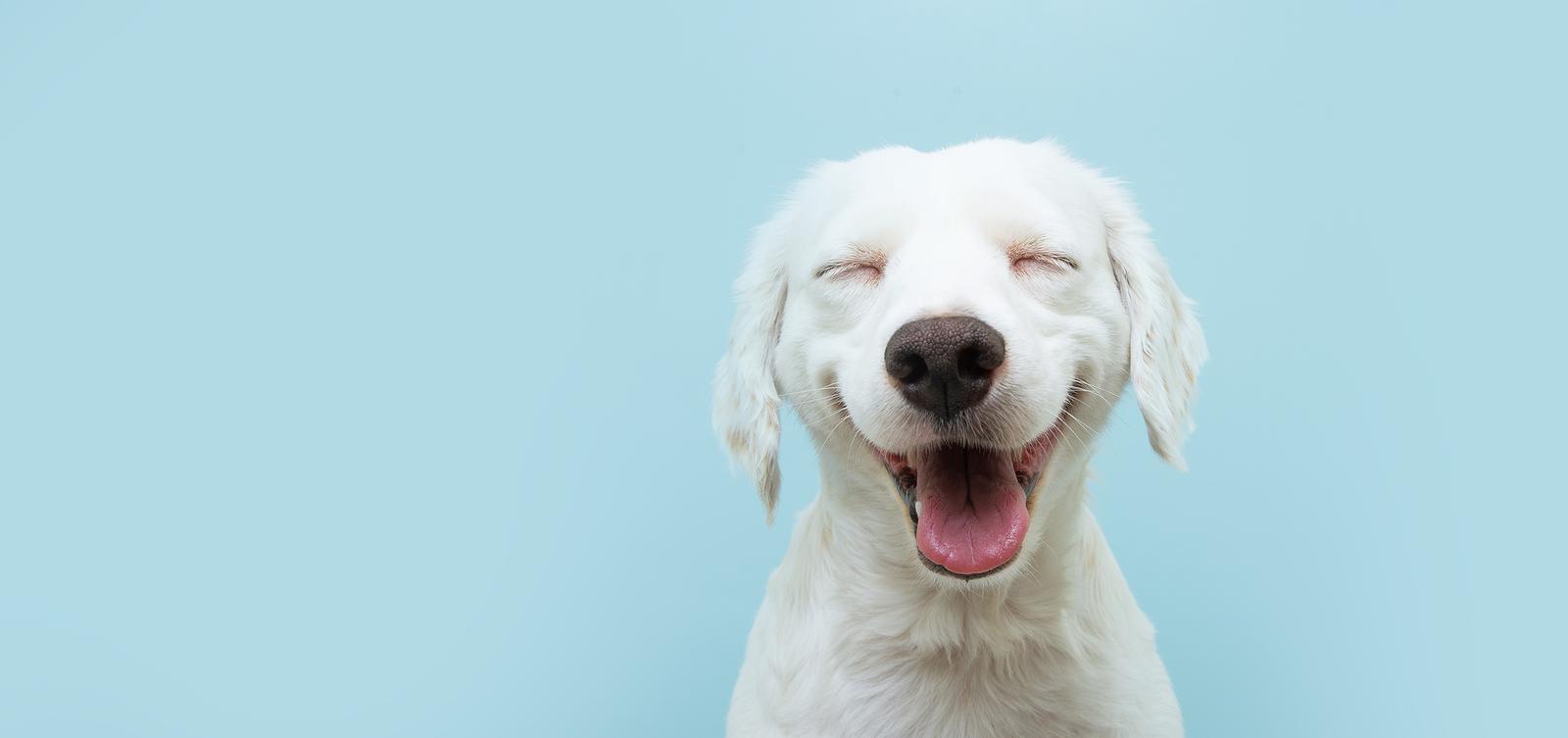 perro-perros-felicidad