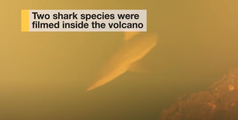 Descubren tiburones viviendo dentro de un volcán activo