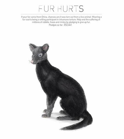 peta-fur-hurts-site-fox