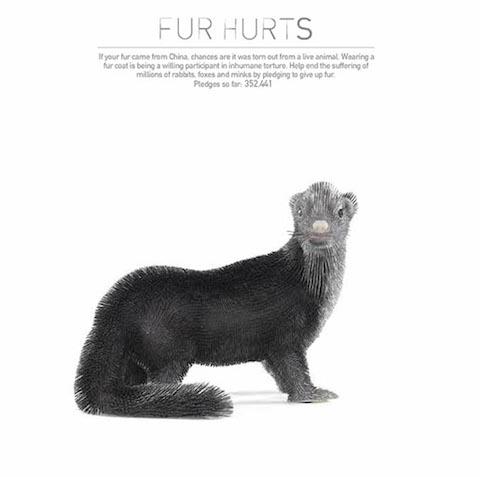 peta-fur-hurts-site-marmoset