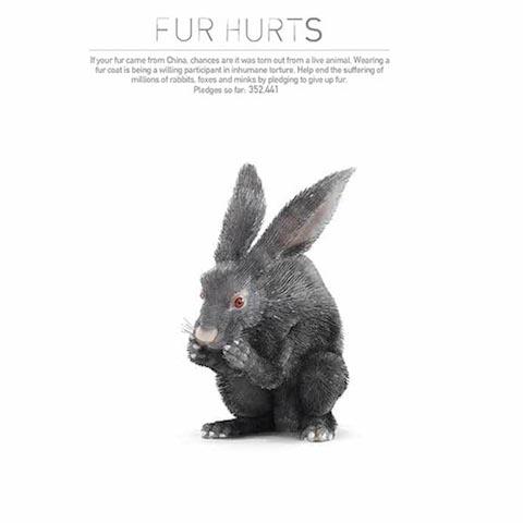 peta-fur-hurts-site-rabbit