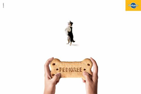pedigree