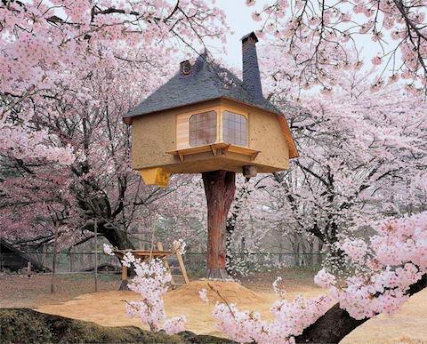 Teahouse-Tetsu-tree-house